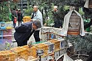 Khám phá chợ Chim Yuen Po - Hồng kông