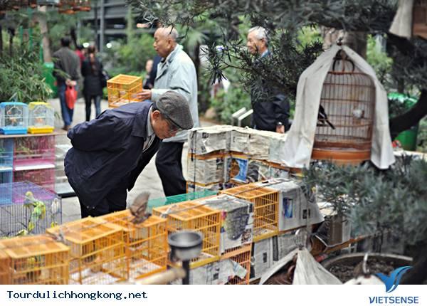 Khám phá chợ Chim Yuen Po - Hồng kông,kham pha cho chim yuen po  hong kong